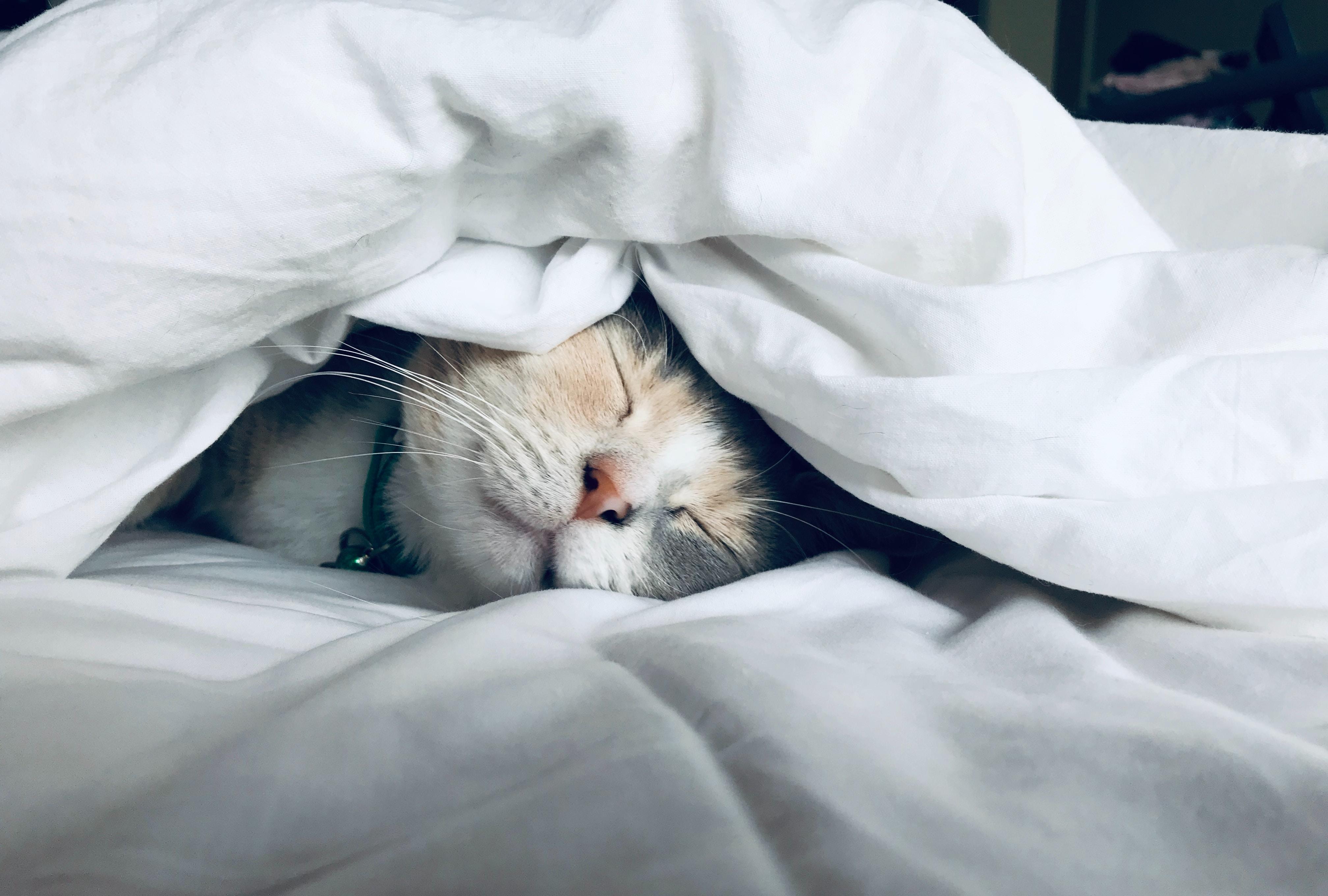 Sleep Secrets Revealed: Hint – How Much Sleep do I Really Need?